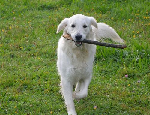 「周囲の困難を助ける」としても、モチベーションが見つかる、というお話(犬の例と義肢の例)